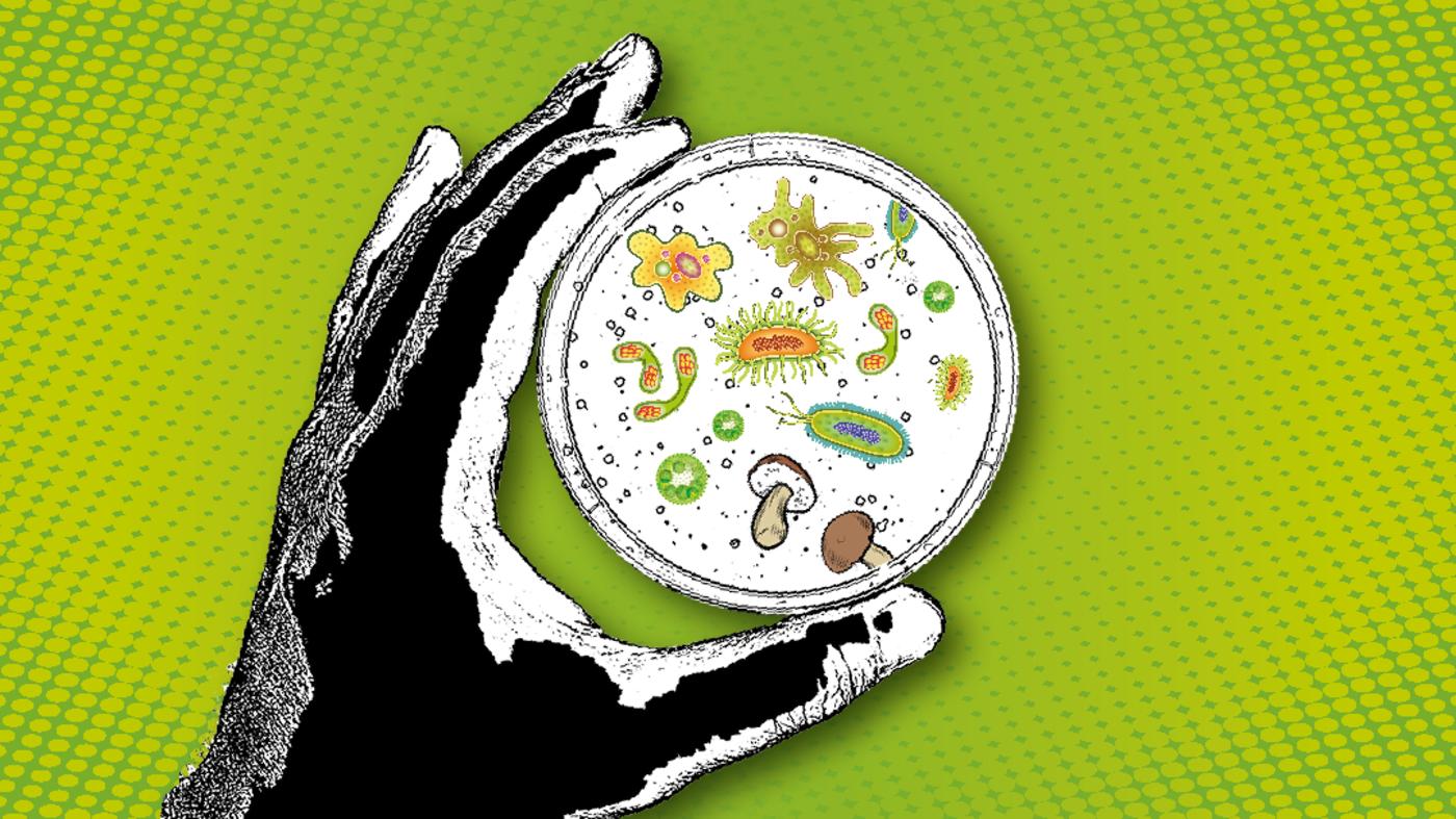 virus antibiotika